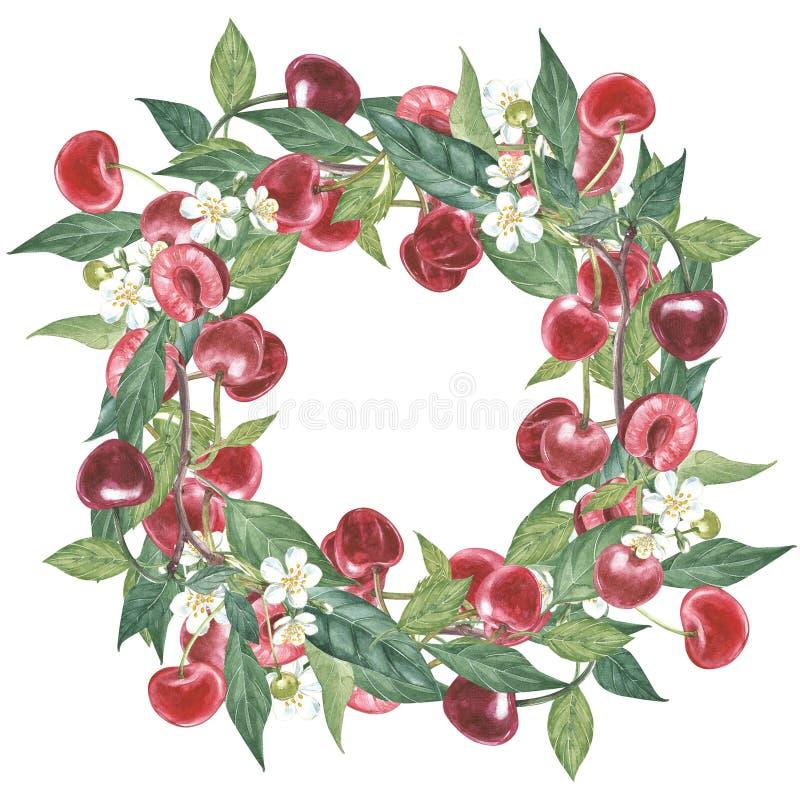 Нарисованный вручную венок акварели цветков иллюстрации вишни и листьев Иллюстрация акварели ботаническая изолированная дальше иллюстрация штока