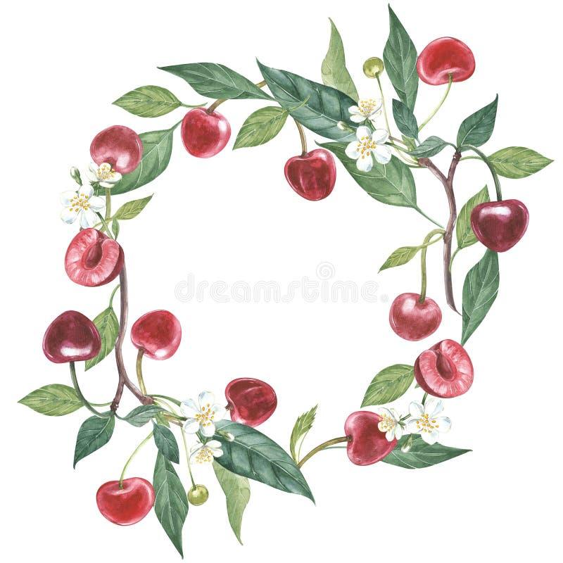 Нарисованный вручную венок акварели цветков иллюстрации вишни и листьев Иллюстрация акварели ботаническая изолированная дальше бесплатная иллюстрация
