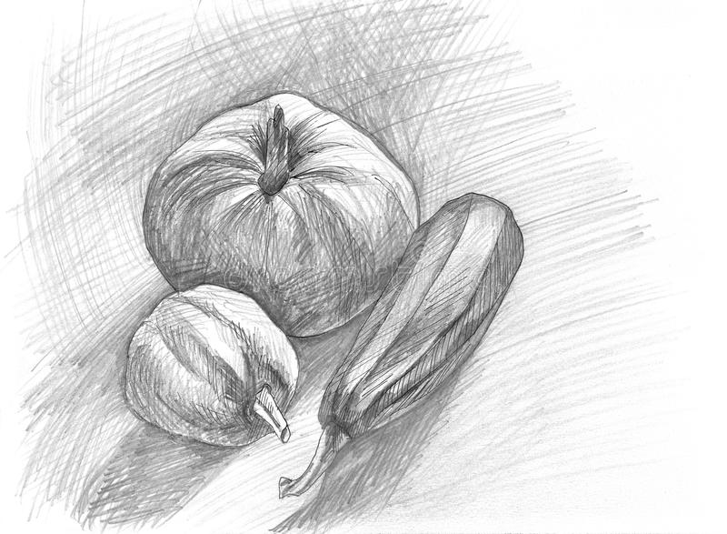 Нарисованный вручную эскиз тыкв и vegetable сердцевины Линейная графическая иллюстрация стоковые изображения