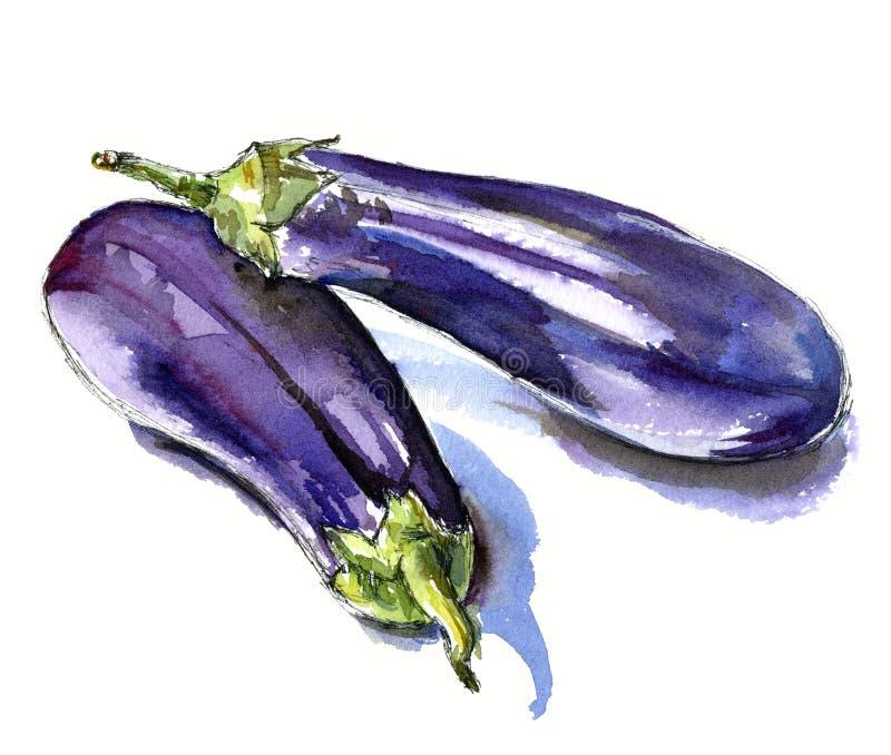Нарисованный рукой баклажан овощей эскиза акварели стоковые фото