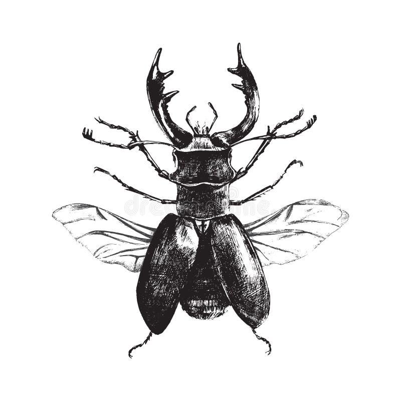 Нарисованный рукой жук оленей иллюстрация штока