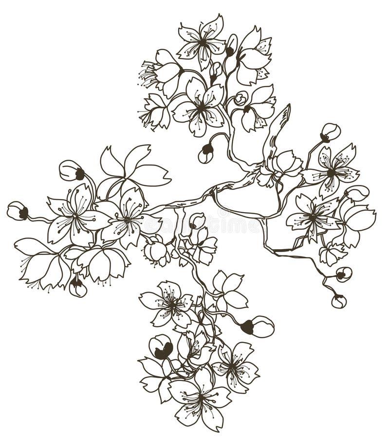 Нарисованный рукой завод Сакуры иллюстрация вектора