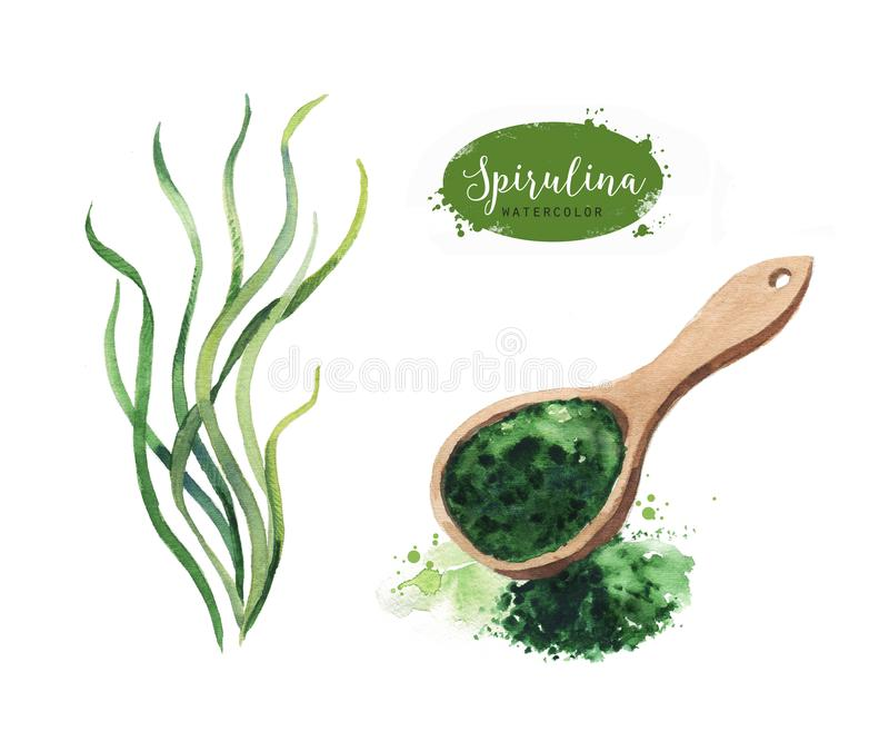 Нарисованный рукой порошок морской водоросли spirulina Изолированные водоросли Spirulina и чертеж порошка на белой предпосылке бесплатная иллюстрация