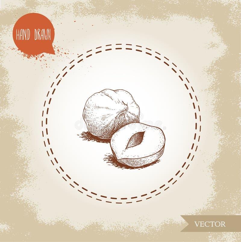 Нарисованный рукой стиль эскиза слез группу семян фундука Иллюстрация вектора еды Eco здоровая Гайка леса иллюстрация штока