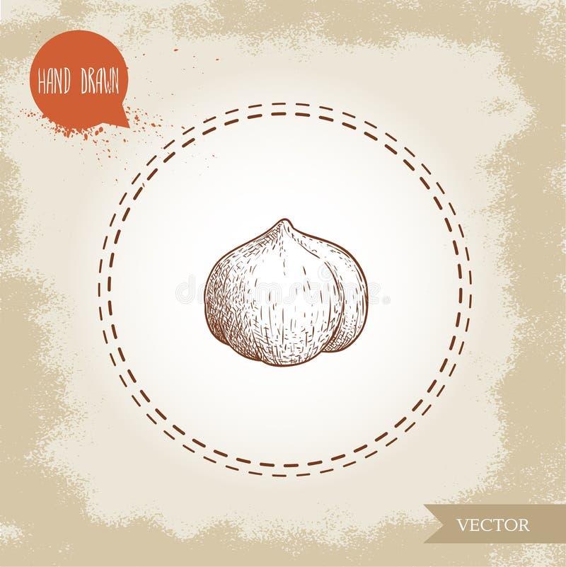 Нарисованный рукой стиль эскиза слез одиночное все семя фундука Иллюстрация вектора еды Eco здоровая Гайка леса иллюстрация штока