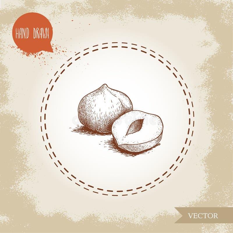 Нарисованный рукой стиль эскиза слез состав семян фундука Иллюстрация вектора еды Eco здоровая Гайка леса иллюстрация штока