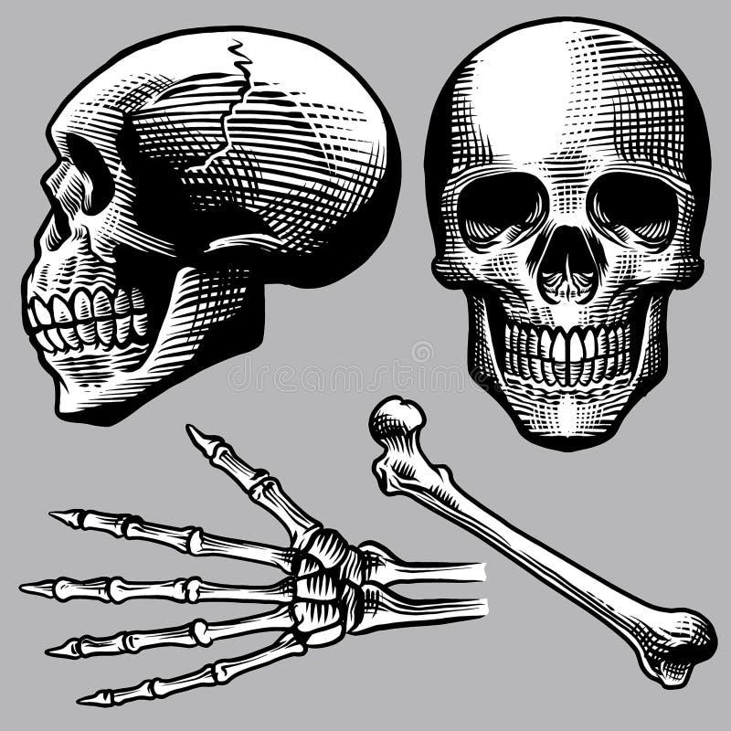 Нарисованный рукой человеческий комплект черепа иллюстрация вектора