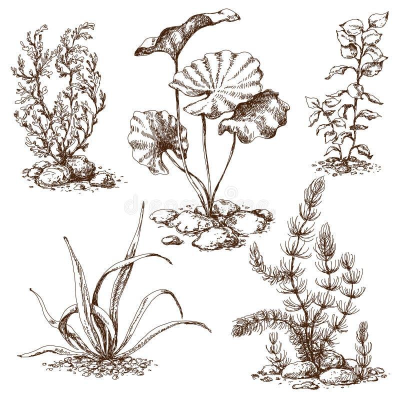 разбирают, тату водоросли в картинках хотя это очень
