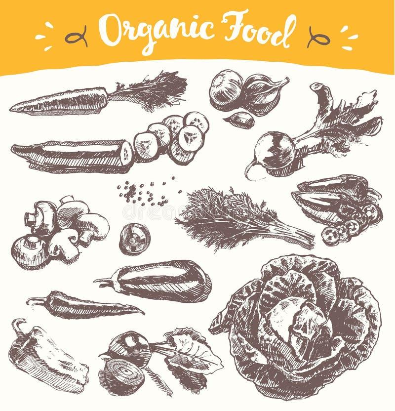 Нарисованный собранием эскиз вектора овощей иллюстрация штока