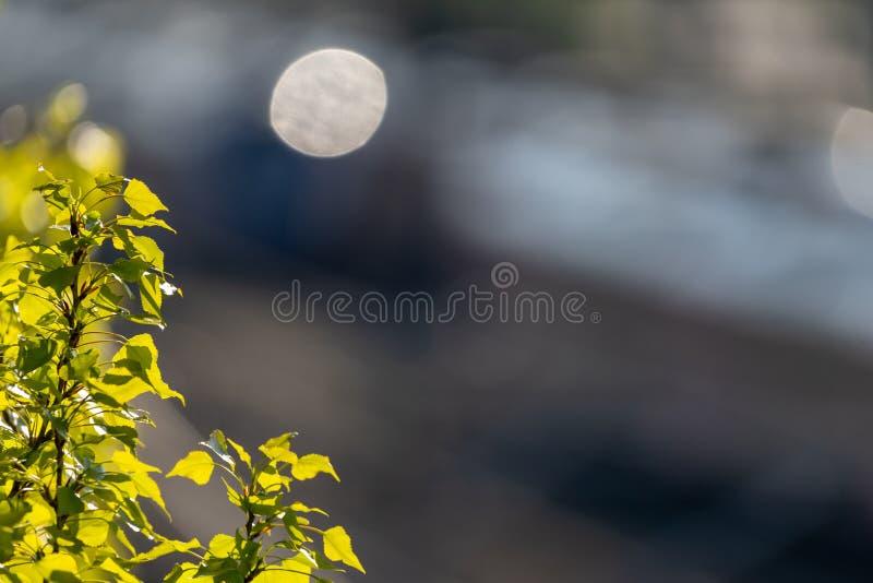 Нарочито запачкал предпосылку с небольшой ветвью дерева березы со свежими зелеными листьями сфокусированными в угле  стоковое изображение