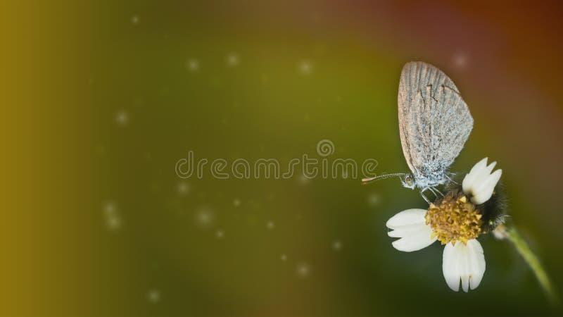 Насекомое бабочки на цветке с желтым rati 16:9 предпосылки тона стоковое фото