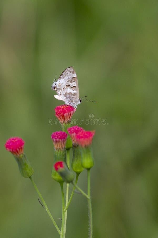 Насекомое в цветке стоковое фото rf