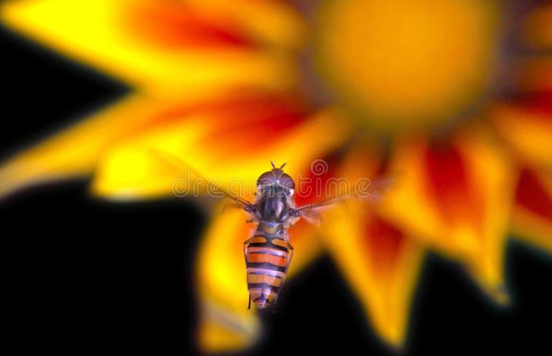 насекомое летания стоковые фото
