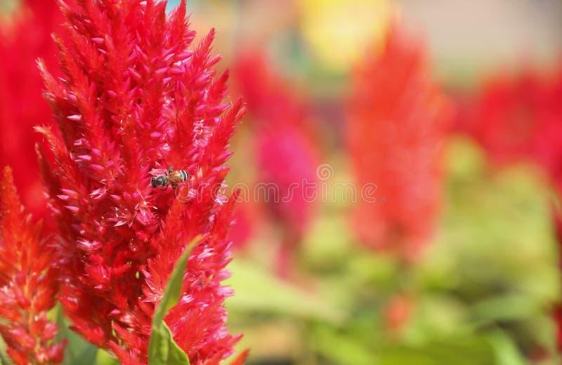 Насекомое на красном цветке стоковое фото rf