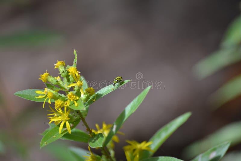 Насекомое на цветковом растении стоковые изображения rf
