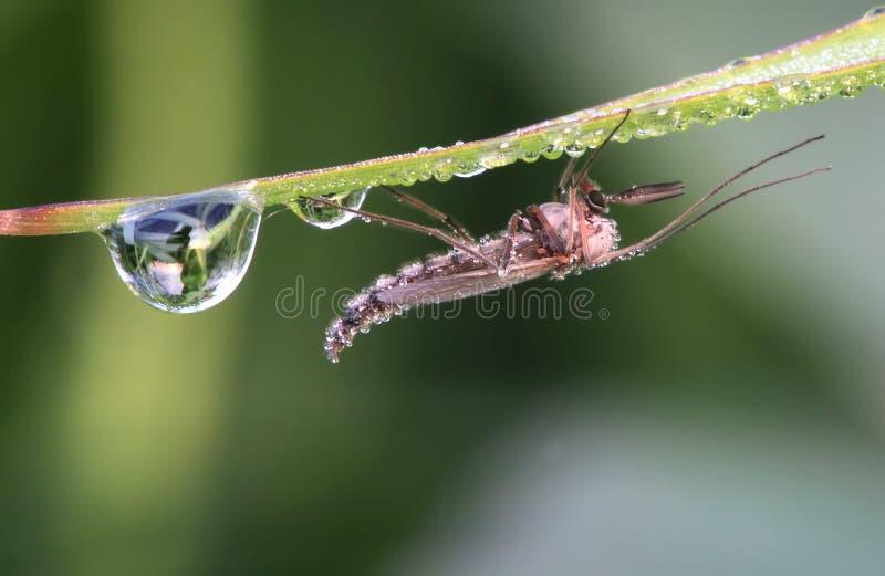 насекомое падений росы стоковое изображение