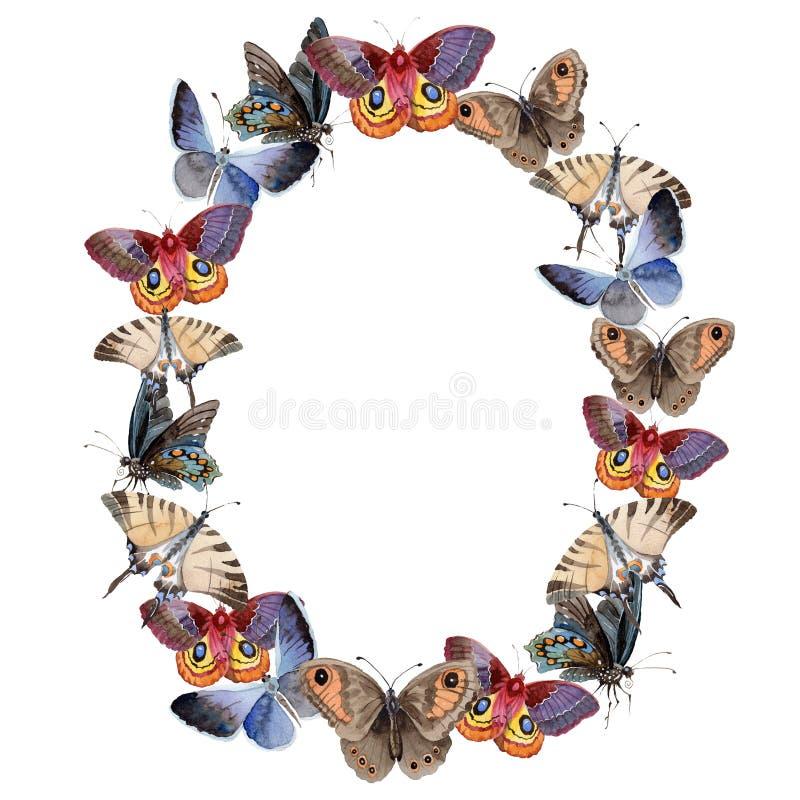 Насекомое предложения бабочки акварели, intresting сумеречница, изолировало иллюстрацию крыла иллюстрация вектора