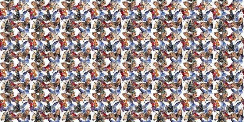 Насекомое предложения бабочки акварели, intresting сумеречница, изолировало иллюстрацию крыла стоковые изображения rf