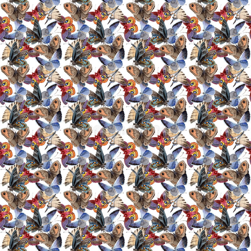Насекомое предложения бабочки акварели, intresting сумеречница, иллюстрация крыла стоковое изображение