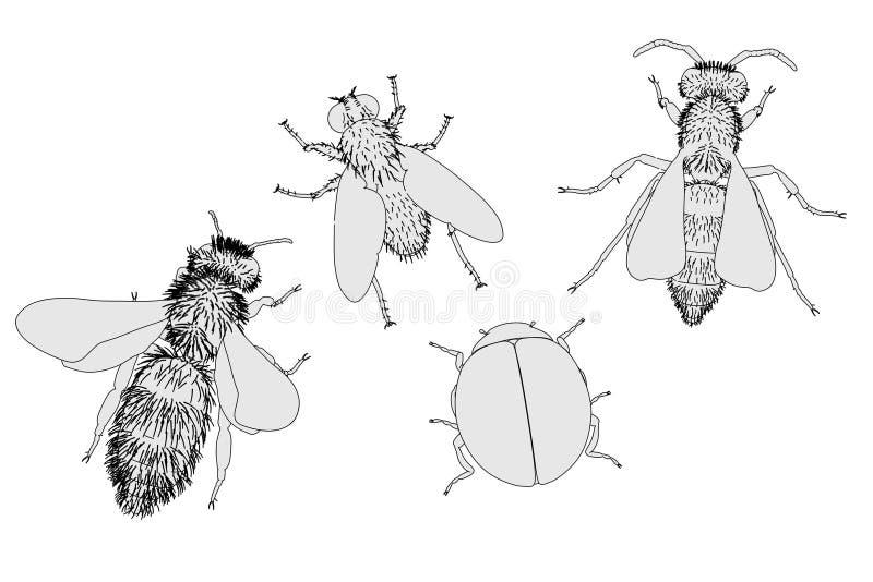 насекомое иллюстрация штока