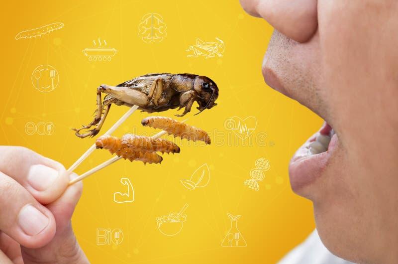 Насекомые еды: Человек есть бамбуковое насекомое червей и сверчков глубок-зажаренное для для еды как закуска еды и питание средст стоковые фото