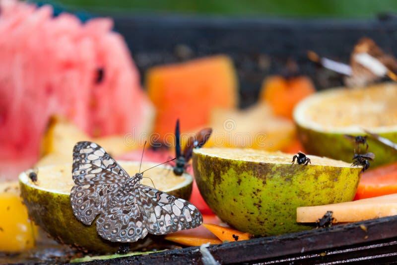 Насекомые есть свежие фрукты стоковые фотографии rf
