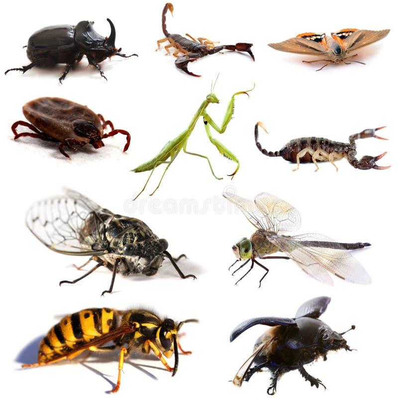 Насекомые и скорпионы стоковая фотография rf