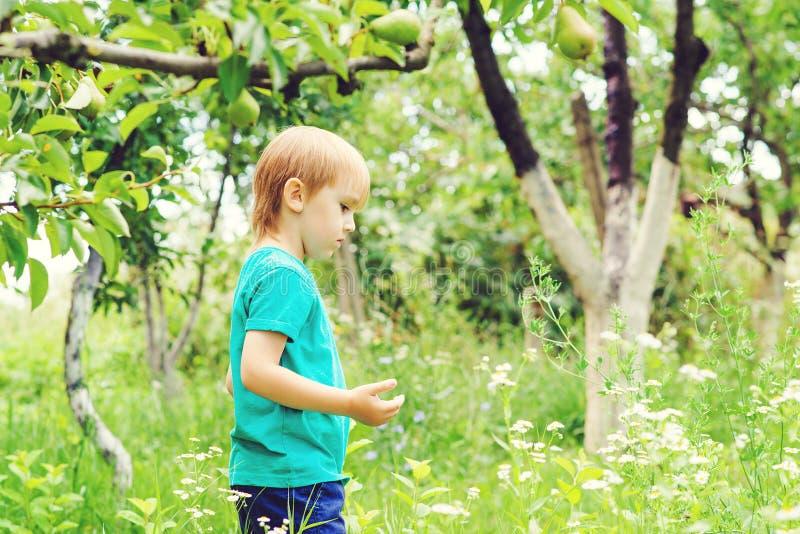 Насекомые любознательного белокурого мальчика заразительные в саде Милый ребенок имея потеху внешнюю стоковое фото rf