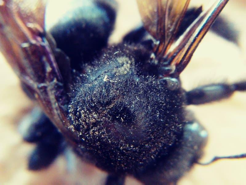 Насекомые путают пчела крыла стоковая фотография rf