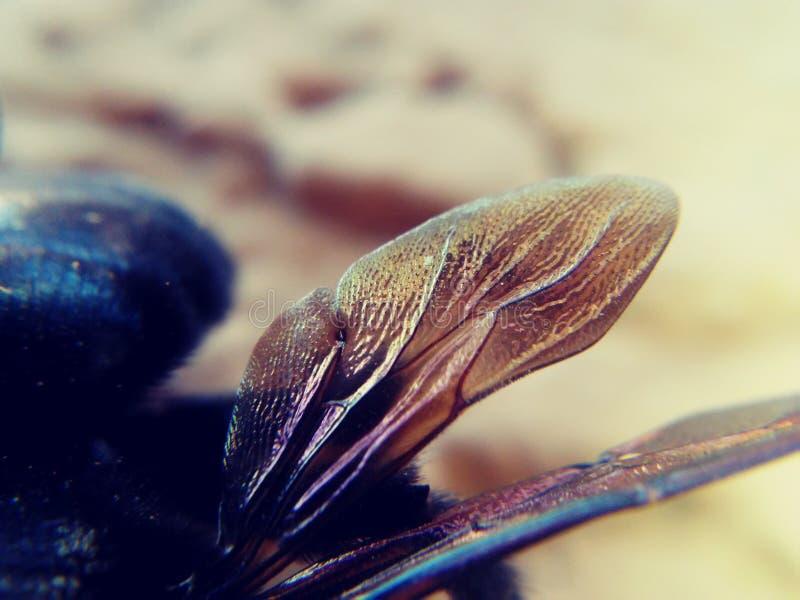 Насекомые путают пчела крыла стоковое фото rf