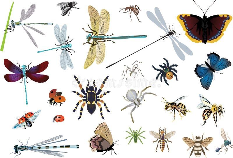насекомые цвета установили спайдеры иллюстрация вектора