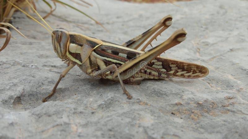 насекомые стоковая фотография