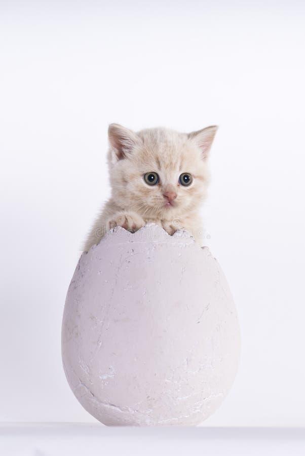 насиживать котенка стоковое фото
