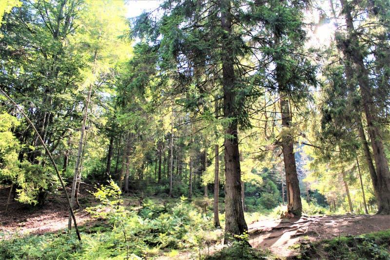 Насладитесь вашим перемещением с горами Карпатов, красотой деревни стоковое фото