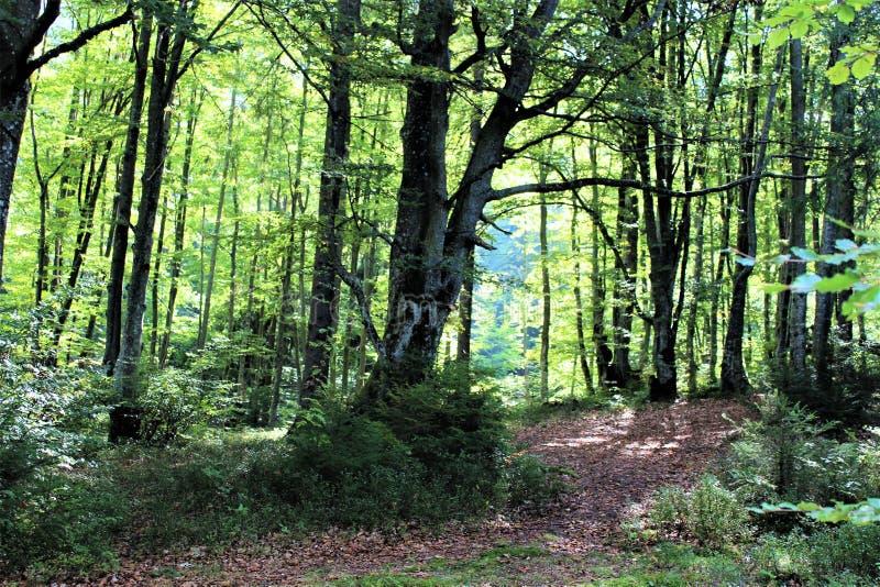 Насладитесь вашим перемещением с горами Карпатов, красотой деревни стоковое изображение rf