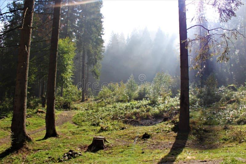 Насладитесь вашим перемещением с горами Карпатов, красотой деревни стоковые изображения rf