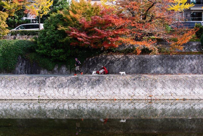 Наслаждаться жизнью вдоль реки Toyohira в осени стоковая фотография rf