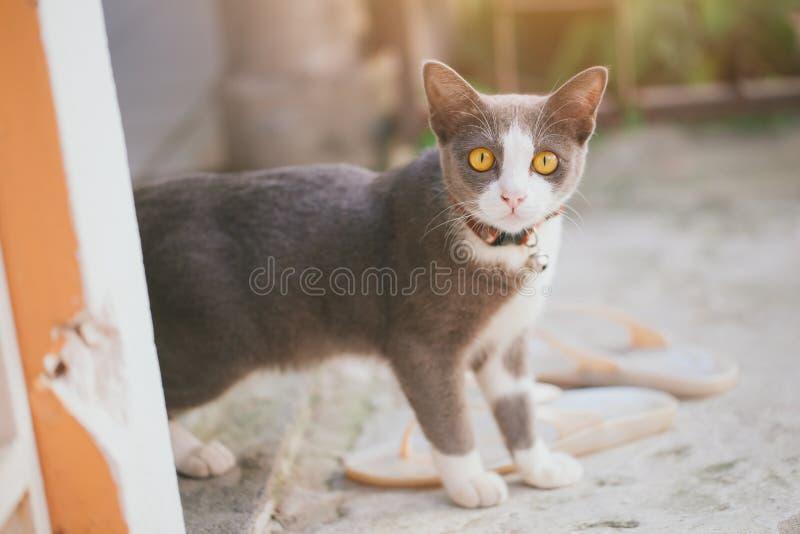 Настолько милое животное небольшое замораживание котенка смотря камеру стоковое фото rf