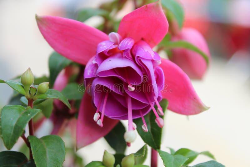 Настолько симпатичный цветок гремя в в воскресенье утром стоковое изображение
