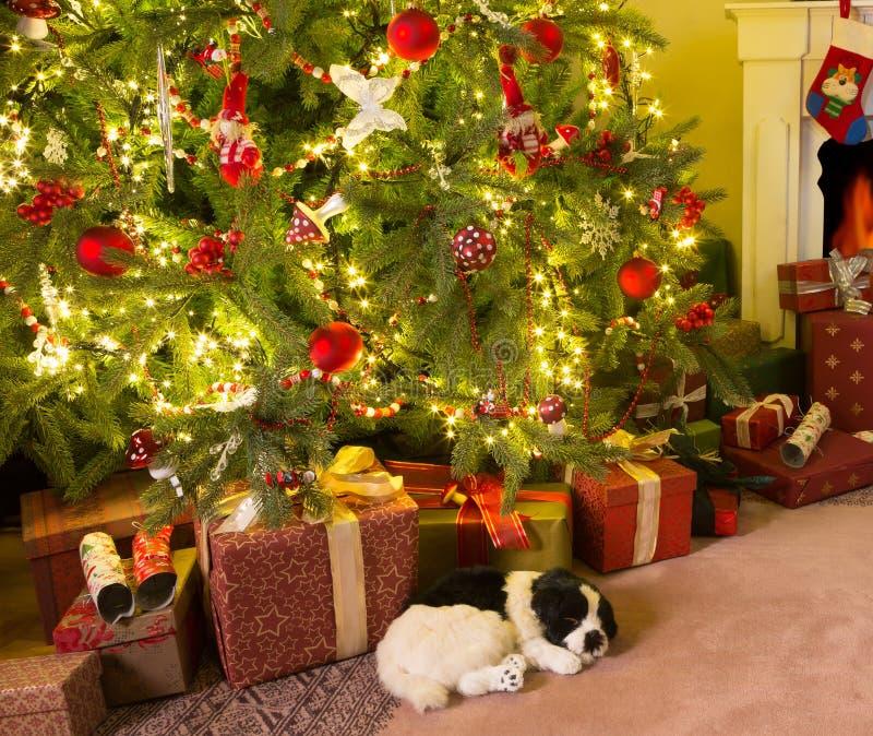 Настоящие моменты под рождественской елкой стоковая фотография rf