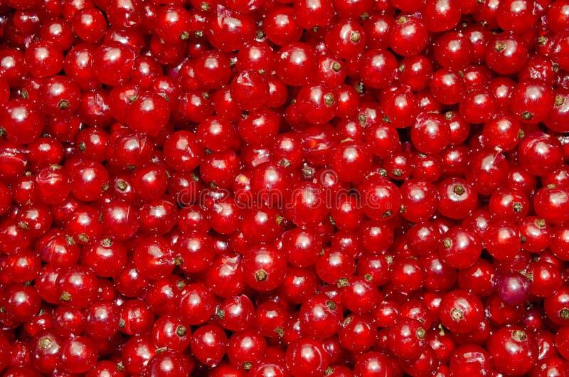 настоящий красный цвет стоковые изображения