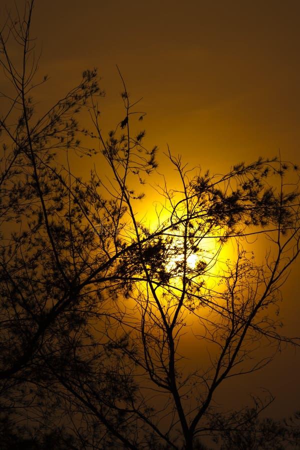 Наступление ночи с деревом стоковые изображения
