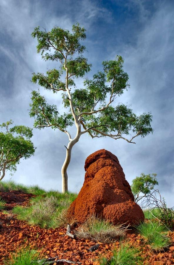 Насыпь термита и уединенное дерево в захолустье Австралии стоковые изображения