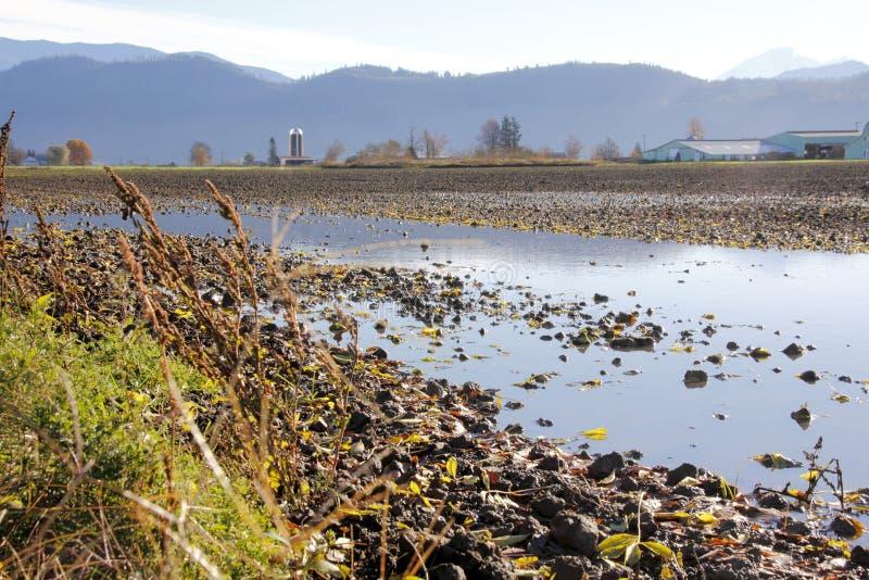 Насыщенное сельскохозяйственное угодье Вашингтона стоковая фотография rf