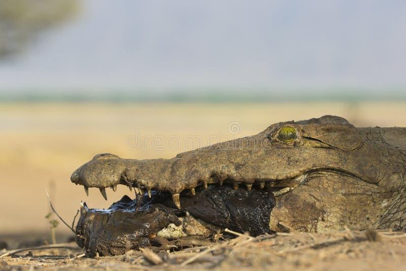 Наслаждение Croc стоковое фото