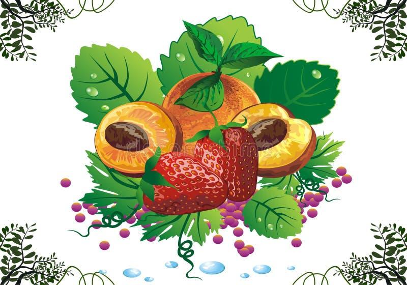 Натюрморт - абрикосы и клубники на зеленых листьях бесплатная иллюстрация