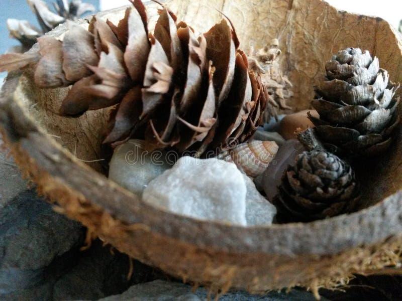 Натюрморт конуса сосны стоковое фото rf