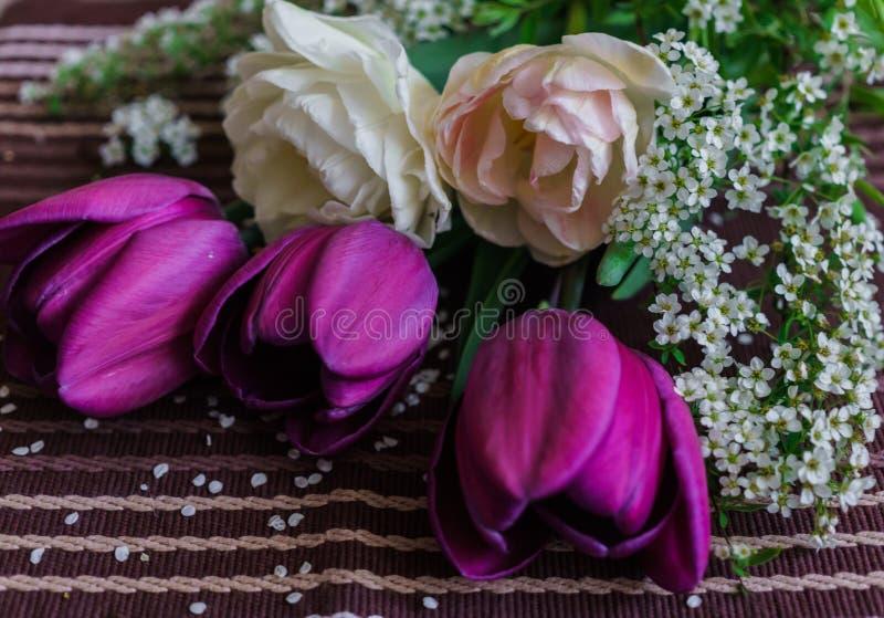 Натюрморт пурпурного и бледного - розовые тюльпаны с хворостинами spirea стоковые изображения rf