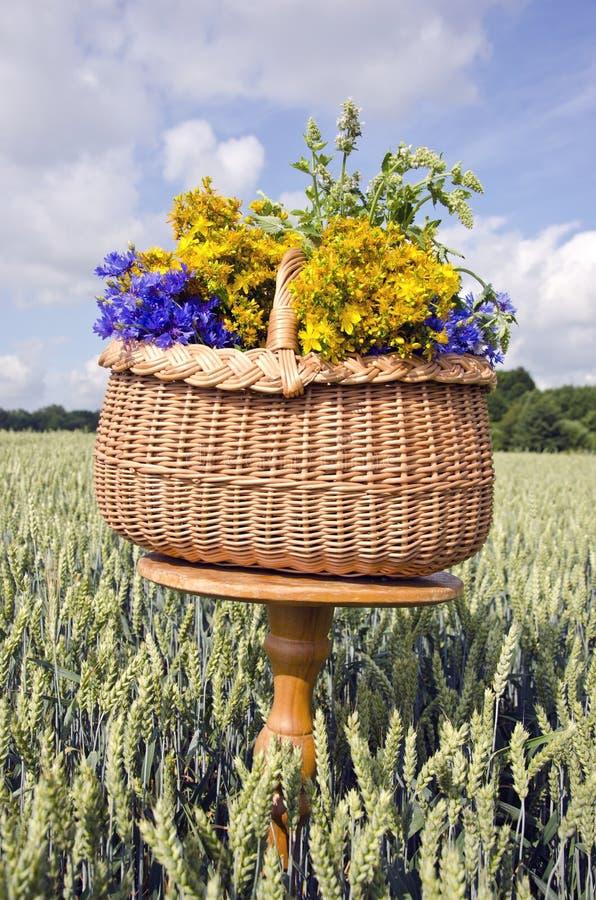 Натюрморт середины лета с корзиной и медицинскими травами цветет стоковое фото rf