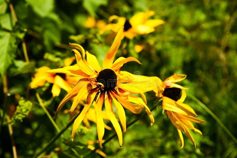 Натюрморт с букетом полевых цветков стоковая фотография